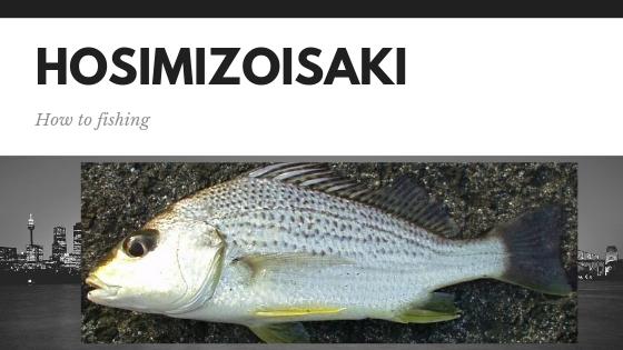 ホシミゾイサキ、ガクガク