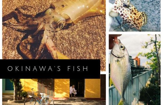 沖縄で釣れるさかな